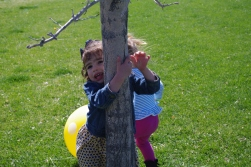 Our little tree hugger.